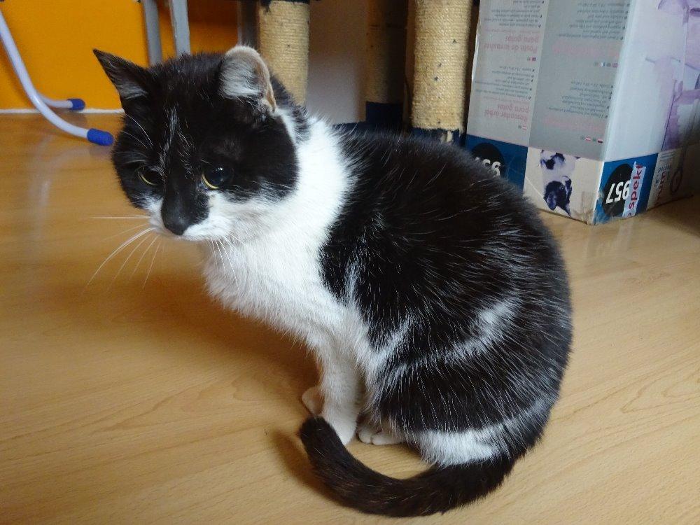 Micinka 1227 - slepá kočka
