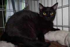 Pepina 1778 - plachá kočka