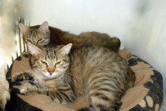 Anežka 1648 Amálka 1649 - palché kočky